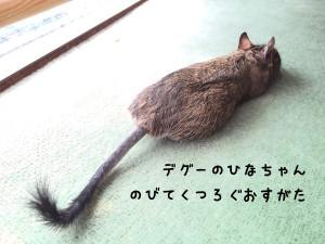 デグー ひなちゃん
